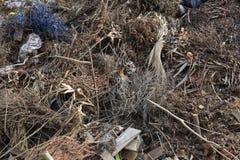 Απορρίμματα δέντρων στην απόρριψη υλικών οδόστρωσης στοκ φωτογραφία με δικαίωμα ελεύθερης χρήσης