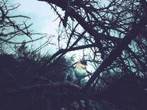 Απόκρυφο πουλί μεταξύ των κλαδίσκων στοκ εικόνες