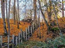 Απότομα ξύλινα σκαλοπάτια στο δάσος φθινοπώρου της κοιλάδας ποταμών Gauja, Sigulda, Λετονία στοκ εικόνες με δικαίωμα ελεύθερης χρήσης
