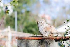 Βάτραχος στον ήλιο στοκ εικόνες