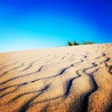 βήματα άμμου της Ρωσίας kurshskaya kosa οριζόντων αμμόλοφων που τεντώνουν στοκ εικόνα με δικαίωμα ελεύθερης χρήσης