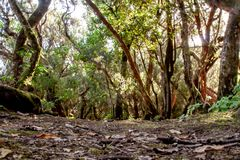 Βαθιά άποψη στο Anaga με τα δέντρα στοκ φωτογραφίες
