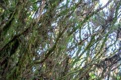 Βαθιά άποψη στο Anaga με τα δέντρα στοκ εικόνες