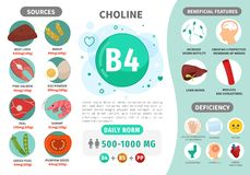 Βιταμίνη B4 Infographics ελεύθερη απεικόνιση δικαιώματος