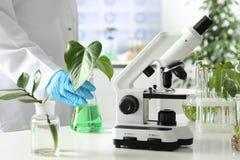 Βοηθητική φιάλη εκμετάλλευσης εργαστηρίων με τις εγκαταστάσεις κοντά στο μικροσκόπιο στοκ φωτογραφία