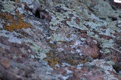 Βρύο σε έναν βράχο στοκ φωτογραφία