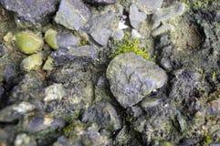 Βρώμικο αμμοχάλικο με το μαύρο και πράσινο βρύο στοκ εικόνα