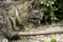 Γάτα με το κουδούνισμα στοκ εικόνες με δικαίωμα ελεύθερης χρήσης
