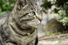 Γάτα με το κουδούνισμα στοκ φωτογραφία με δικαίωμα ελεύθερης χρήσης