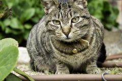 Γάτα με το κουδούνισμα στοκ εικόνες