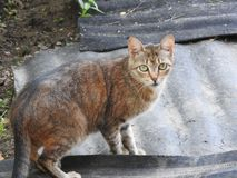Γάτα στο υπόβαθρο του αγροτικού φυσικού περιβάλλοντος μια θερινή ημέρα στοκ φωτογραφία