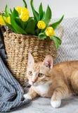 Γάτα που βρίσκεται στο γκρίζο καρό εσωτερικό, Cosiness στοκ φωτογραφίες με δικαίωμα ελεύθερης χρήσης