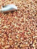 Γλυκά αραβικά φρούτα ημερομηνίας στοκ εικόνες