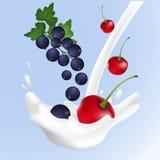 Γλυκοί παφλασμοί γάλακτος ρεαλιστικών διανυσματικών κερασιών απεικόνισης και μαύρων σταφίδων διανυσματική απεικόνιση