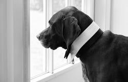 Γραπτή εικόνα ενός σκυλιού στοκ φωτογραφίες