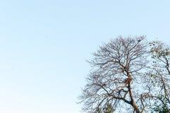 Γυμνό νεκρό υπόβαθρο μπλε ουρανού κλάδων δέντρων στοκ φωτογραφίες