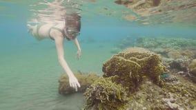 Γυναίκα που κολυμπά με αναπνευτήρα με τη μάσκα και το σωλήνα και που προσέχει στα τροπικά ψάρια και την κοραλλιογενή ύφαλο στη θά φιλμ μικρού μήκους