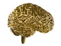 εγκέφαλος χρυσός ελεύθερη απεικόνιση δικαιώματος