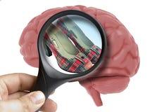 Εγκέφαλος που αναλύεται ανθρώπινος με την ενίσχυση - παπούτσια γυναικών γυαλιού μέσα στον εθισμό που απομονώνεται απεικόνιση αποθεμάτων