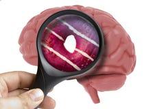 Εγκέφαλος που αναλύεται ανθρώπινος με την ενίσχυση - doughnut γυαλιού γλυκό μέσα στον εθισμό που απομονώνεται απεικόνιση αποθεμάτων