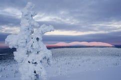 Εθνικό πάρκο του Παλλάς, Φινλανδία στοκ φωτογραφίες