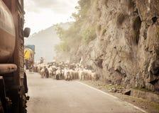 Εικόνα άποψης αυτοκινήτων Ένα κοπάδι των προβάτων που περπατούν κατά μήκος μιας εθνικής οδού χωρών στο himalayan βουνό περνά στο  στοκ εικόνα