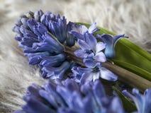 Εικόνα του μπλε hyacith στον γκρίζο τάπητα στοκ εικόνα με δικαίωμα ελεύθερης χρήσης
