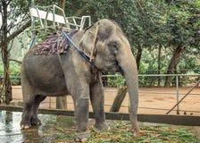 Ελέφαντες για τους οδηγώντας τουρίστες στοκ εικόνες