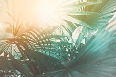 Ελαφριές πτώσεις πρωινού μέσω του φύλλου φοινικών Εξωτικός τροπικός στοκ εικόνες
