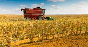 Εμπορικός αραβόσιτος που καλλιεργεί στην Αφρική στοκ εικόνα με δικαίωμα ελεύθερης χρήσης