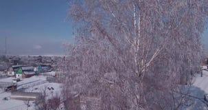 Εναέρια άποψη του άσπρου παγετού κορυφές στις παγωμένες δέντρων στην επαρχία πτήση πέρα από treetop 4K φιλμ μικρού μήκους