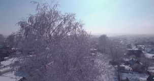 Εναέρια άποψη του άσπρου παγετού κορυφές στις παγωμένες δέντρων στην επαρχία πτήση πέρα από treetop 4K απόθεμα βίντεο
