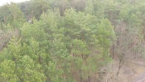Εναέρια άποψη του πεύκο-αποβαλλόμενου δάσους την πρώιμη άνοιξη απόθεμα βίντεο