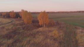 Εναέριο ζωηρόχρωμο δάσος φθινοπώρου με τα κίτρινα πορτοκαλιά πράσινα δέντρα φιλμ μικρού μήκους