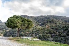 Ενιαίο δέντρο στην κορυφή ενός βουνού στοκ φωτογραφίες