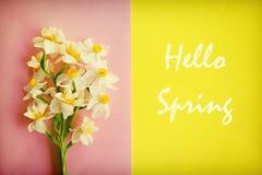 Εννοιολογική εικόνα διάθεσης άνοιξη Εποχιακά λουλούδια στο φωτεινό υπόβαθρο στοκ φωτογραφίες