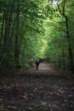 Εξερεύνηση των ξύλων στοκ φωτογραφίες με δικαίωμα ελεύθερης χρήσης