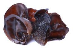 Εδώδιμος μύκητας του μαύρου μύκητα στοκ εικόνες