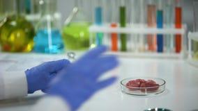 Ερευνητής που αναλύει το δείγμα κρέατος με την ενίσχυση - γυαλί, helminthes εξέταση απόθεμα βίντεο