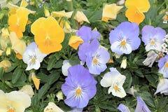 Εύθυμο βαλς άνοιξη των όμορφων λουλουδιών στοκ φωτογραφία με δικαίωμα ελεύθερης χρήσης