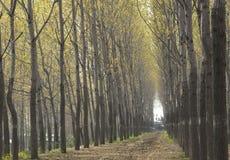 ευθυγραμμισμένο οδικό δέντρο στοκ εικόνες