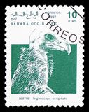 Ευνοούμενος γύπας (occipitalis Trigonoceps), Σαχάρα Occ serie, circa 1992 στοκ εικόνες με δικαίωμα ελεύθερης χρήσης