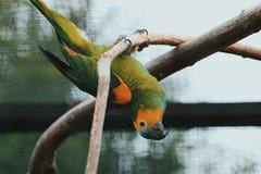 Ευτυχής παπαγάλος στοκ εικόνα