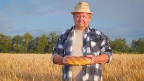 Επιτυχής αγρότης στον τομέα του σίτου Ένα ενήλικο άτομο καταδεικνύει ένα προϊόν φιαγμένο από σίτο, ψωμί Χρόνος συγκομιδών έννοιας απόθεμα βίντεο