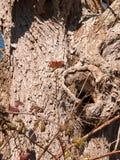 Επιφύλαξη φύσης φυτιλιών Fingringhoe έξω από τη διαστημική επαρχία ανοικτών χωρών υποβάθρου τοπίων στοκ εικόνες με δικαίωμα ελεύθερης χρήσης