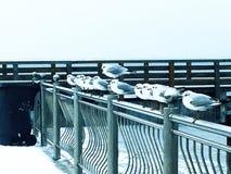 Επιχείρηση πεινασμένα seagulls κοντά στη θάλασσα της Βαλτικής στοκ εικόνες με δικαίωμα ελεύθερης χρήσης