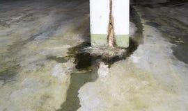 Ζημία νερού στη συγκεκριμένη κατασκευή με το ασβέστιο και τις καταθέσεις και τις λακκούβες σκουριάς στοκ εικόνες