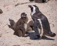 Ζώα στην Αφρική στοκ εικόνες
