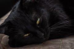Ζωή των γατών και των ανθρώπων στοκ φωτογραφία με δικαίωμα ελεύθερης χρήσης