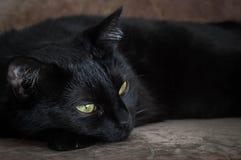 Ζωή των γατών και των ανθρώπων στοκ εικόνες